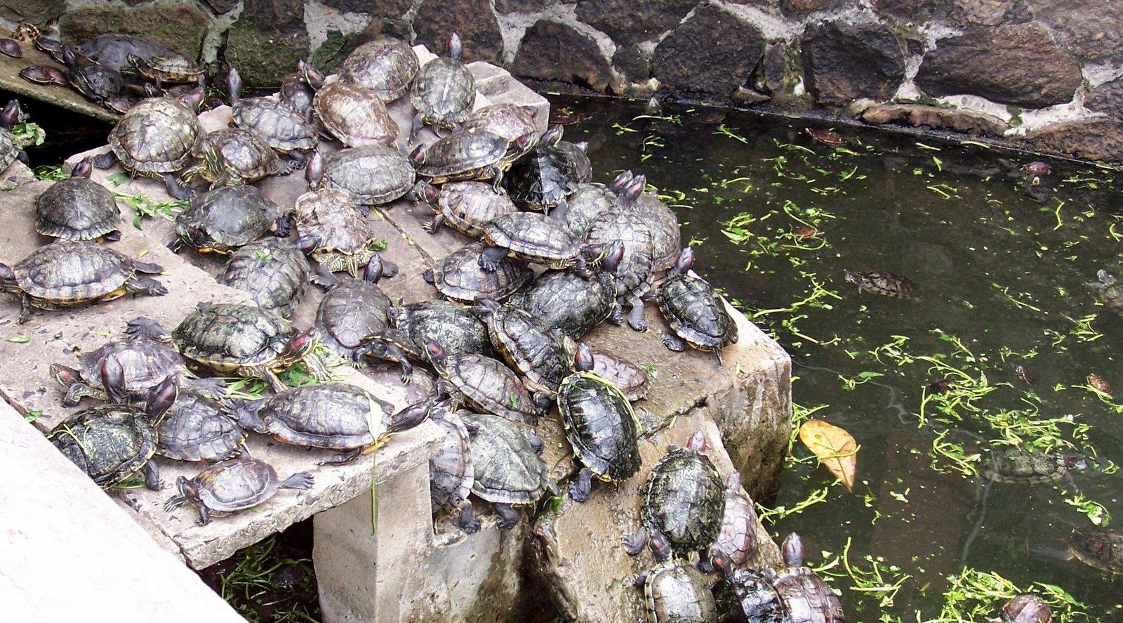 Schildkrötentempel Saigon - Vietnam