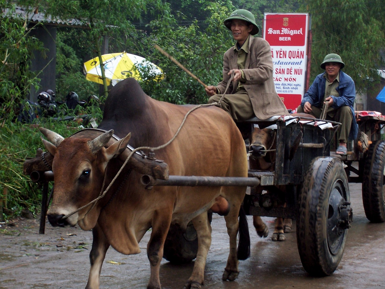 Ochsenkarren in Vietnam