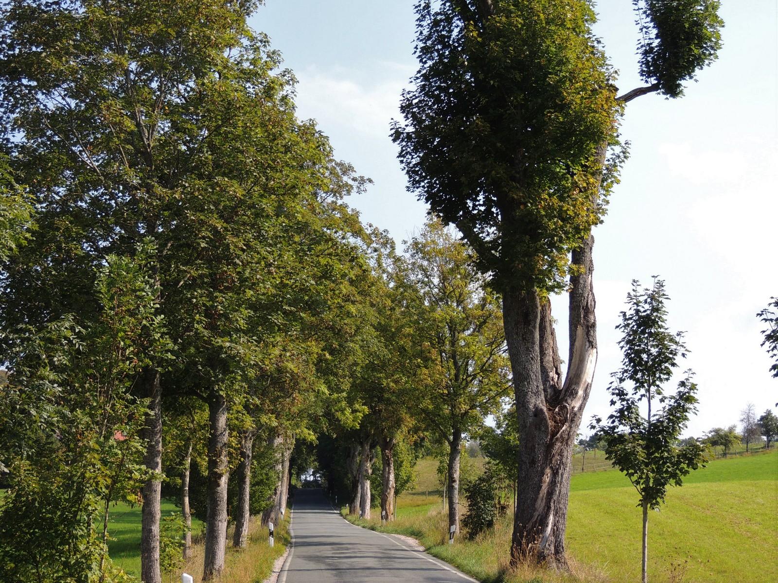 Beigarten - Grünwald-Rundkurs