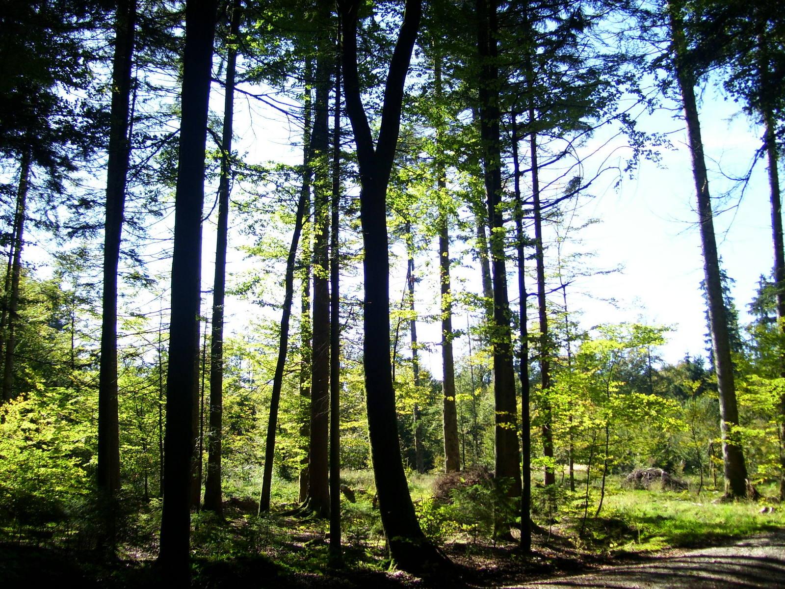 Zeller Wald im Tölzer Land