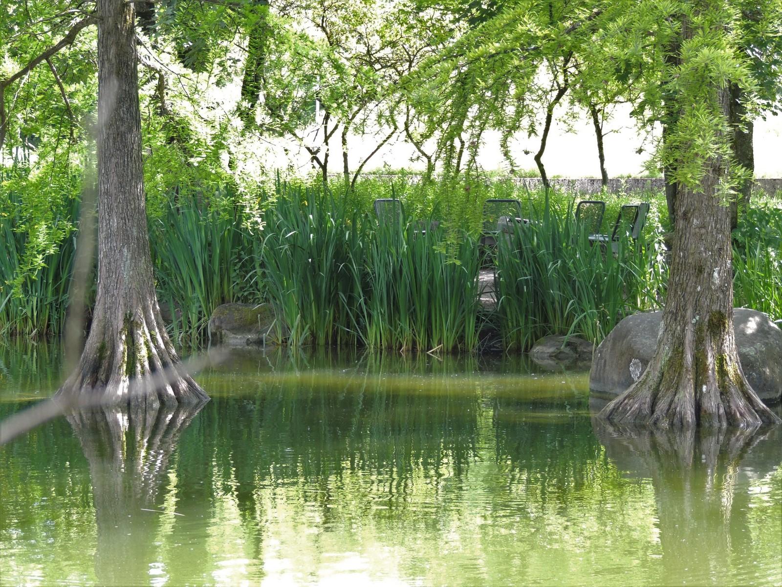 Sumpfzypressen im Westpark München