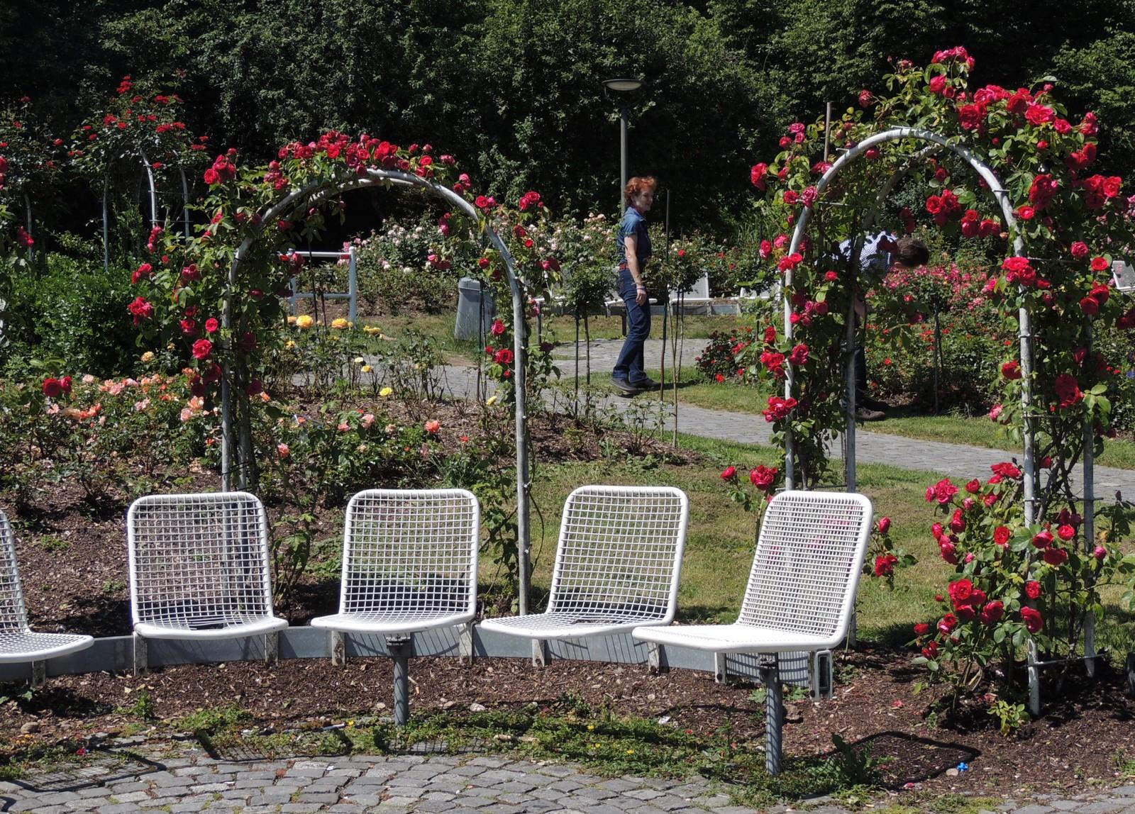 Rosengarten im Westpark
