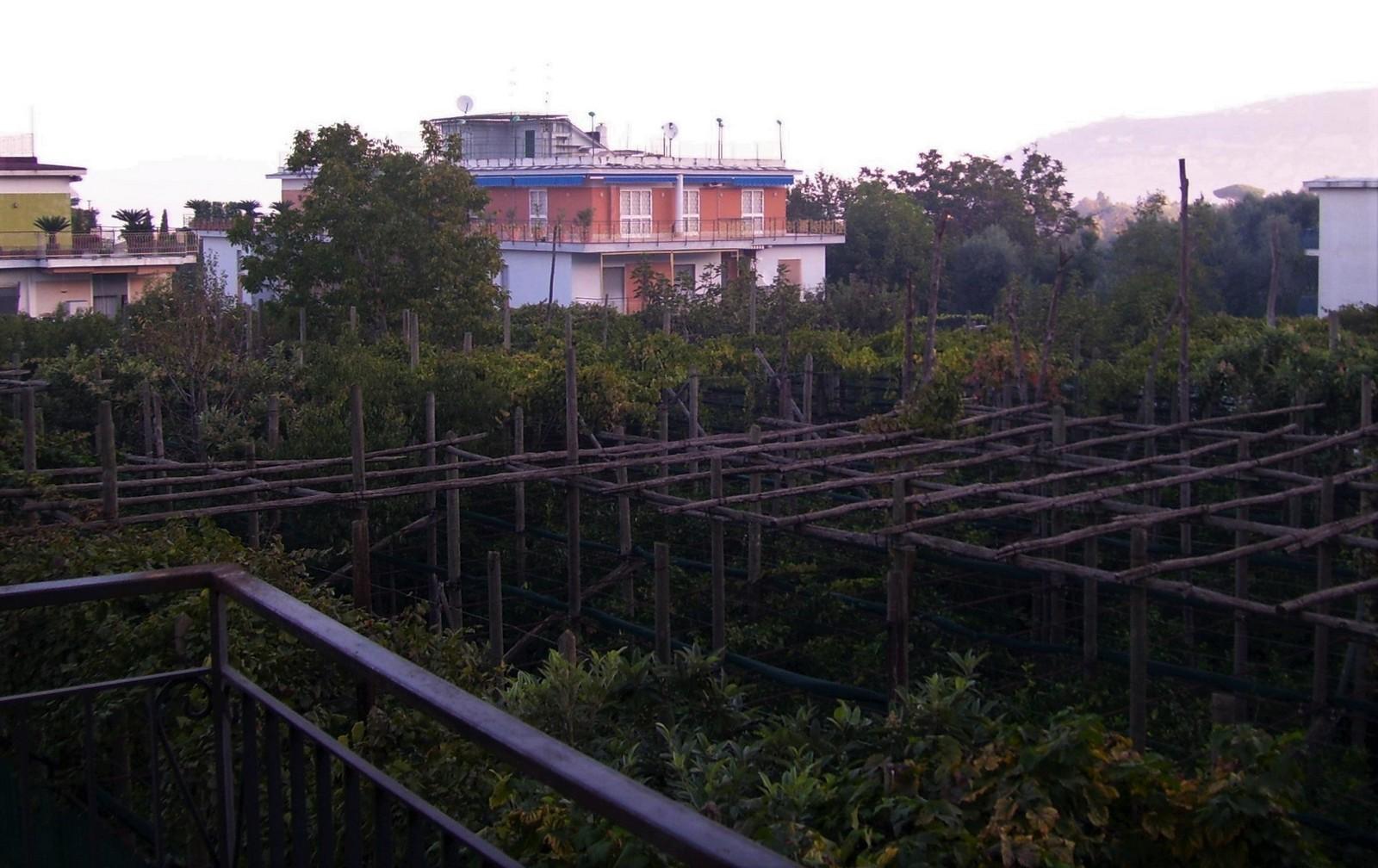 Weingarten hinter dem Hotel Zi Teresa