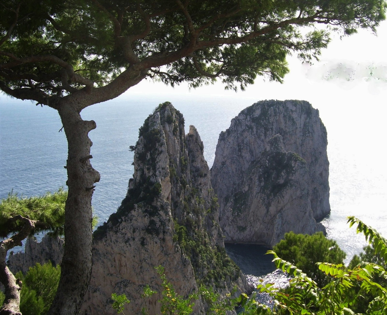 Capri - die Faraglioni