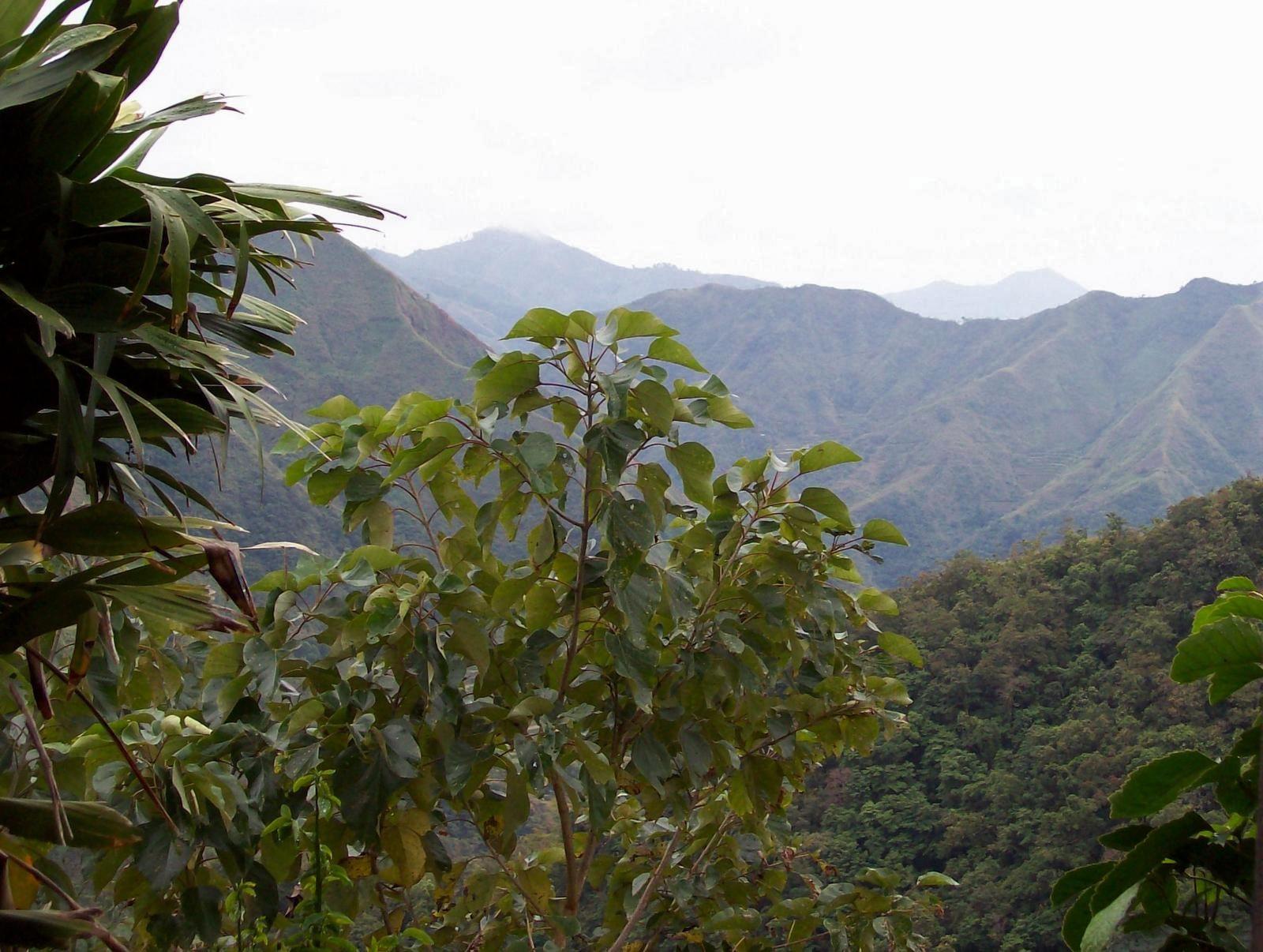 Wanderung in den Kordilleren - Luzon