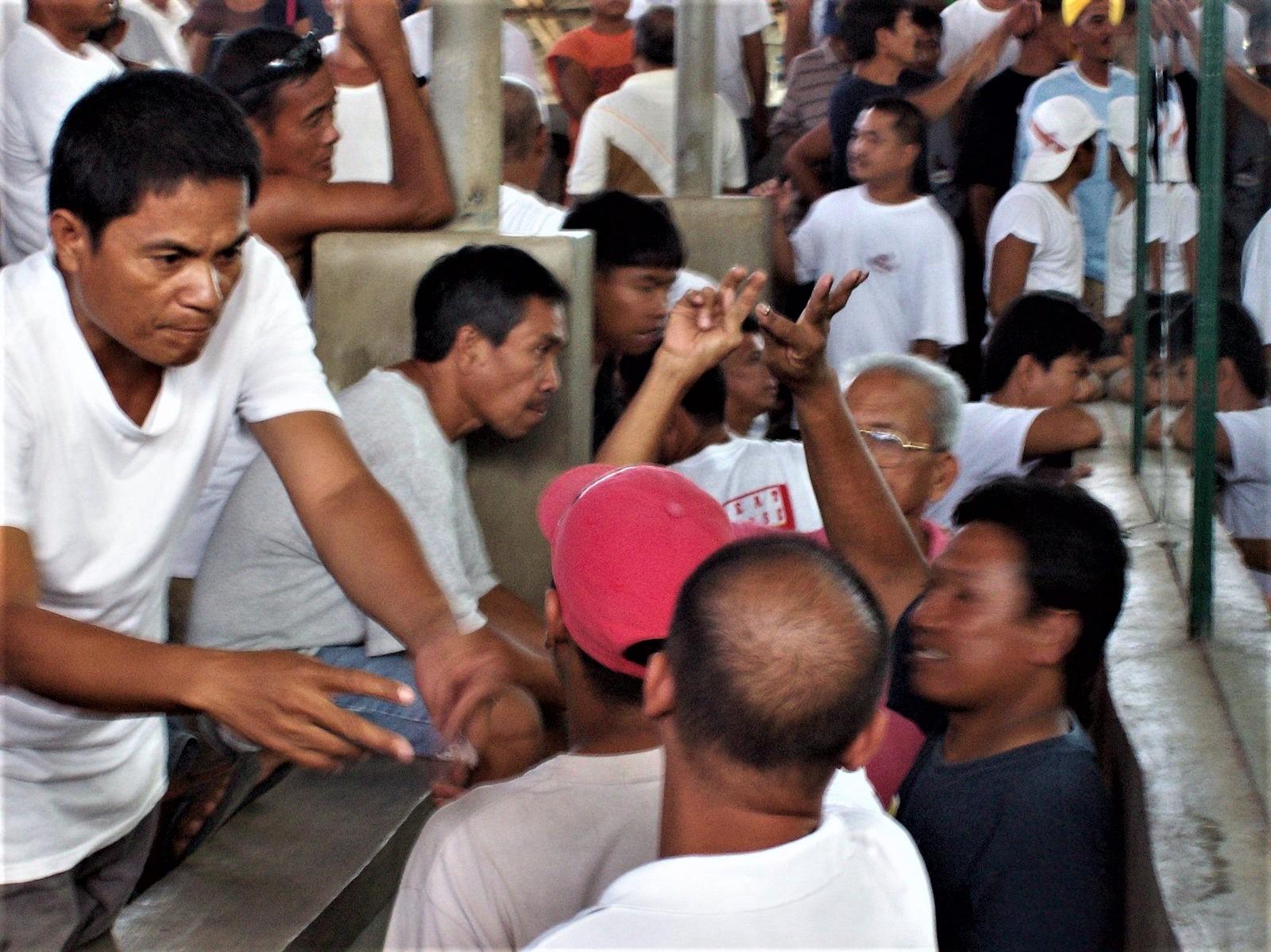 Philippinischer Hahnenkampf