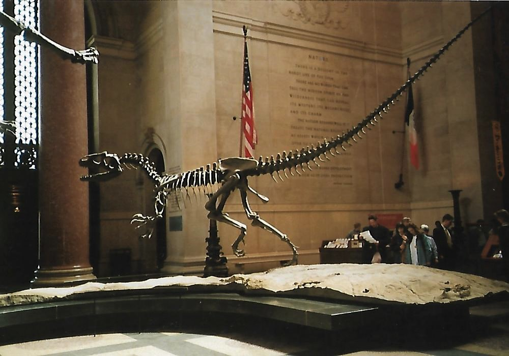American Museum of Natural History New York