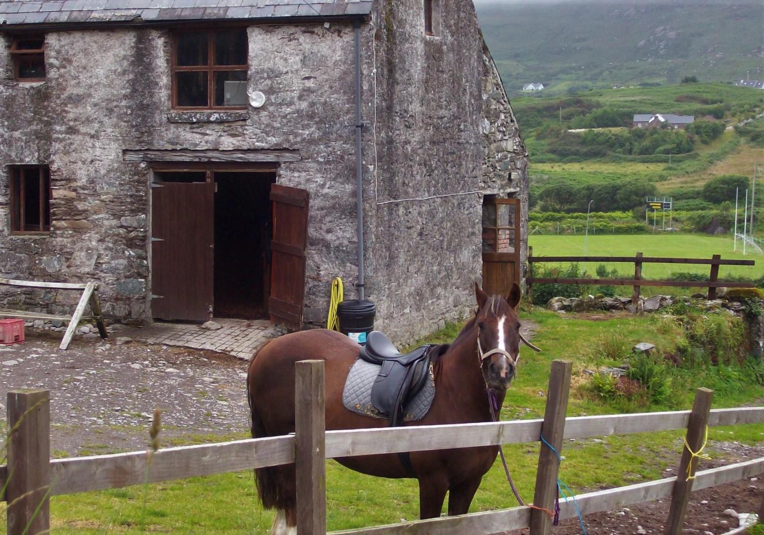 Wanderweg von Caherdaniel zum Lamb's Head - Reitstall