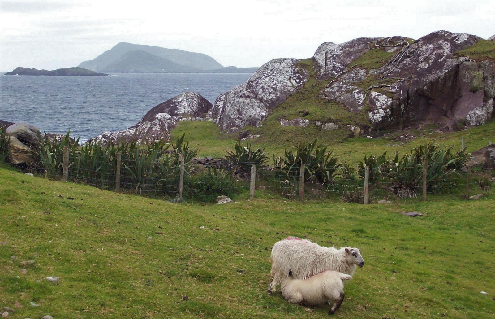 Wanderweg von Caherdaniel zum Lamb's Head