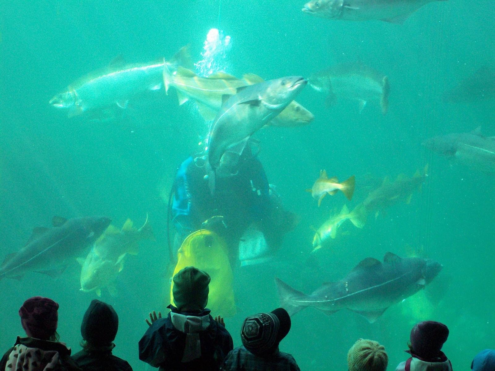 Atlanterhavsparken - Salzwasseraquarium mit Taucher