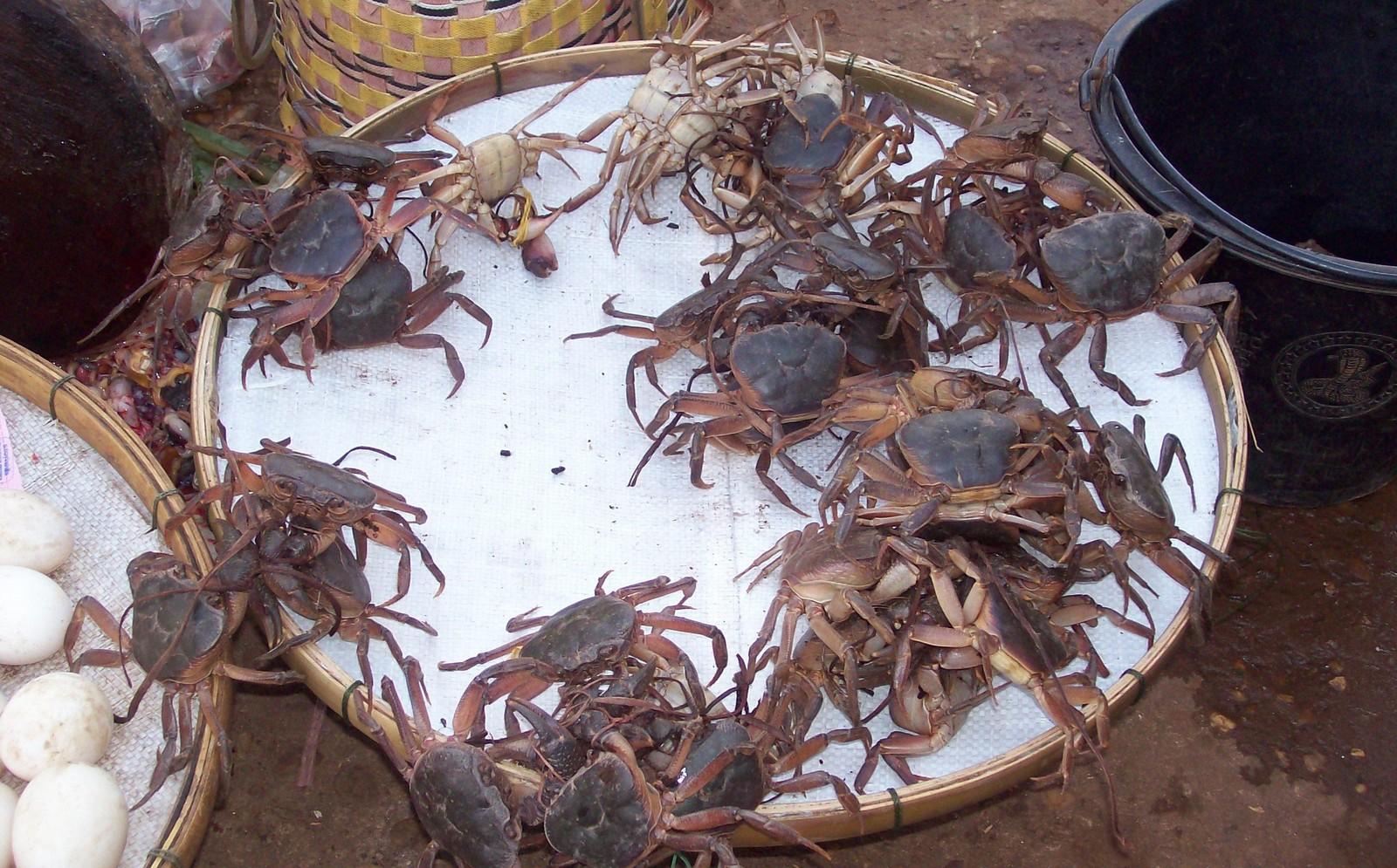Mekong-Flusskrebse auf dem Markt von Pakse - Laos