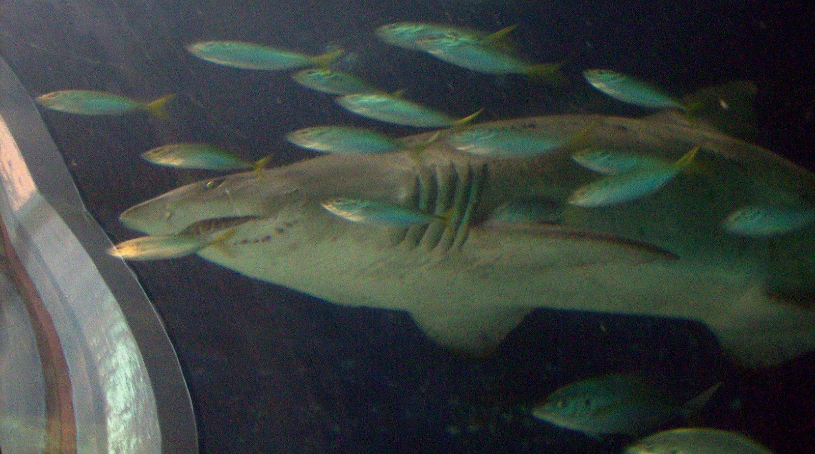 Aquarium von Mooloolaba - Queensland