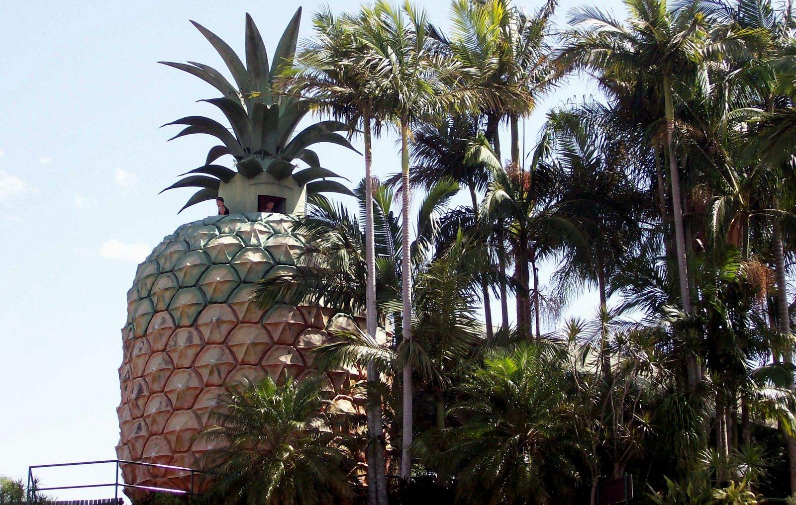 Big Pineapple in Woombye