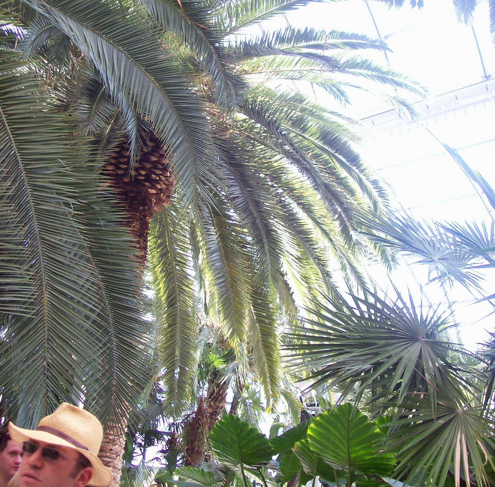 Palmenhaus Mainau