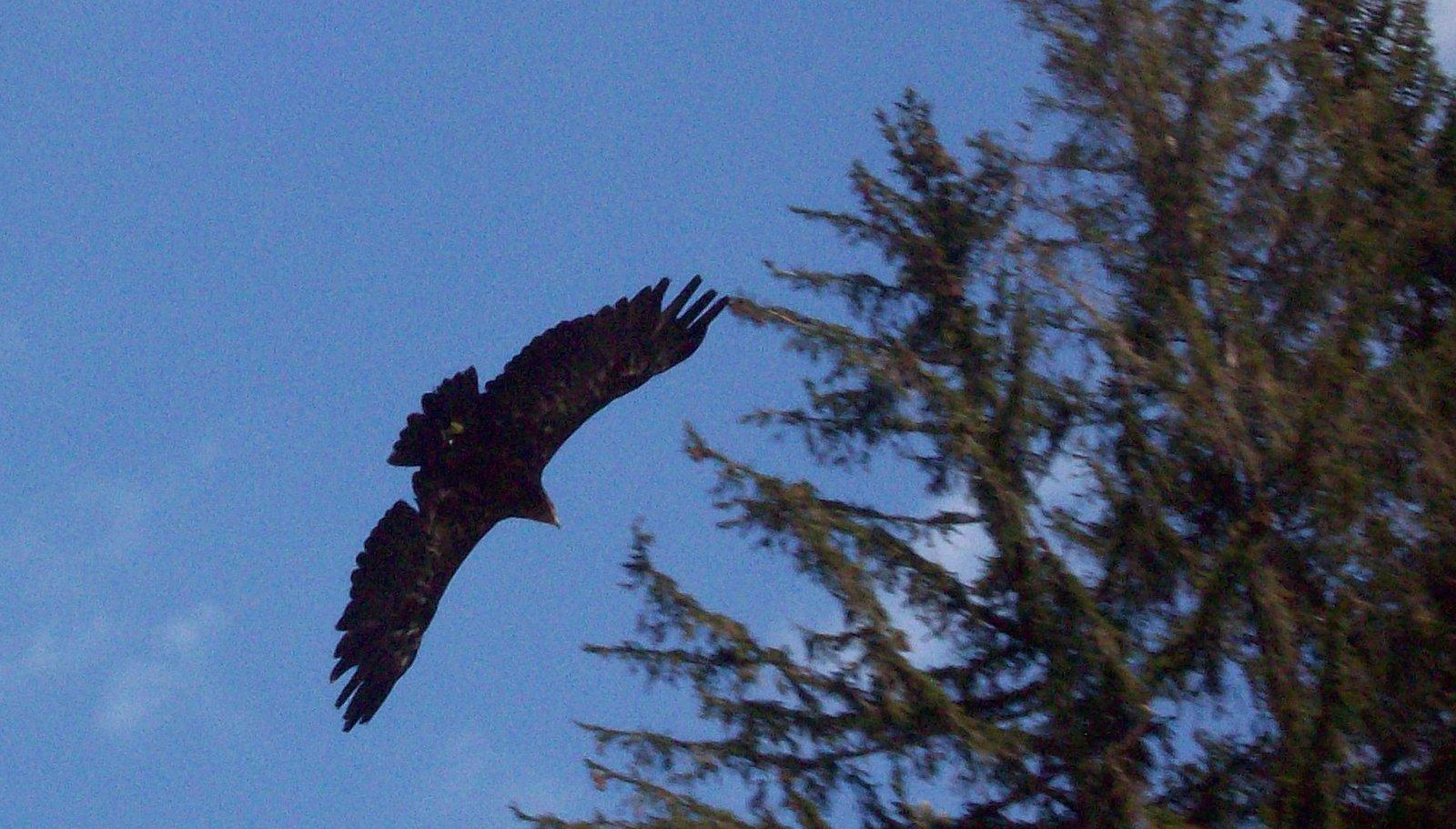 Adlerwarte auf dem Pfänder