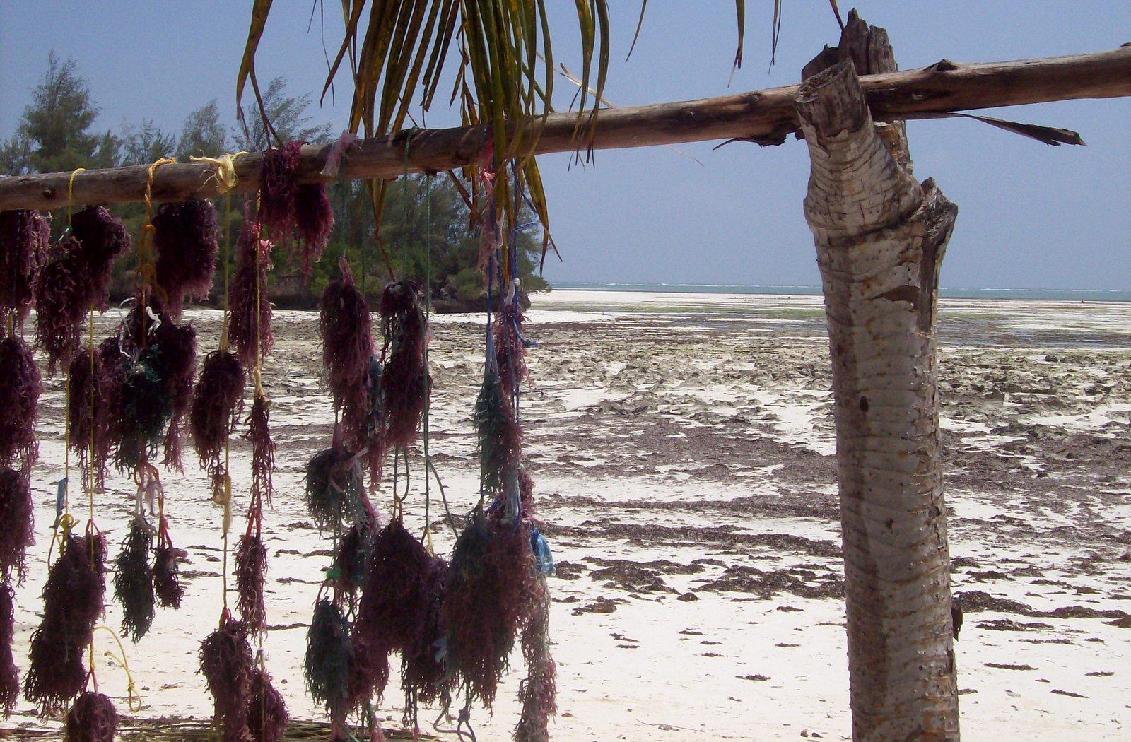 Pongwe Sansibar
