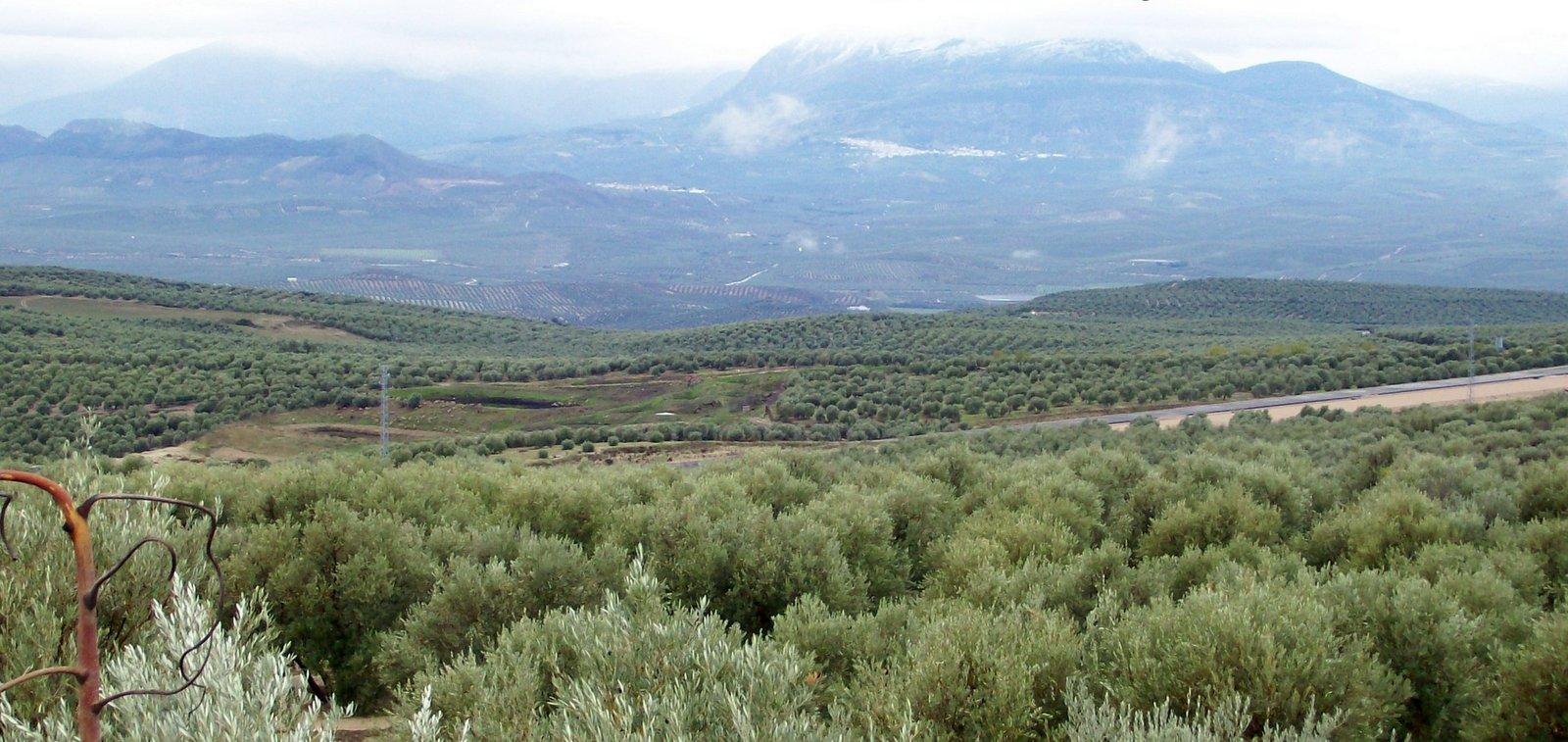 Olivenhaine bei Ubeda