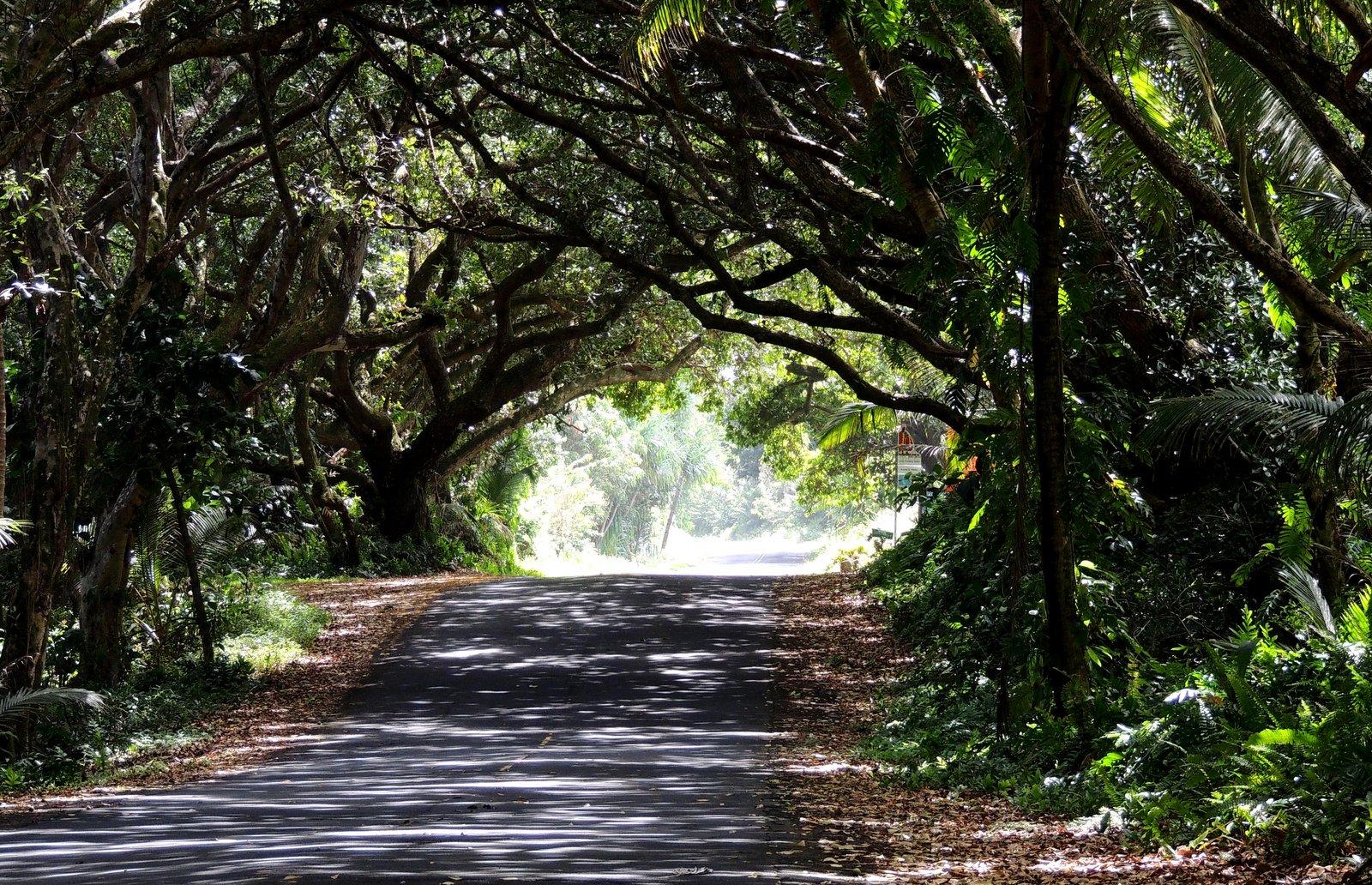 Straße nach Kalapana - Hawaii