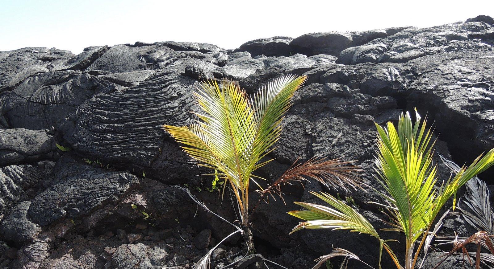 Lavafeld auf Hawaii