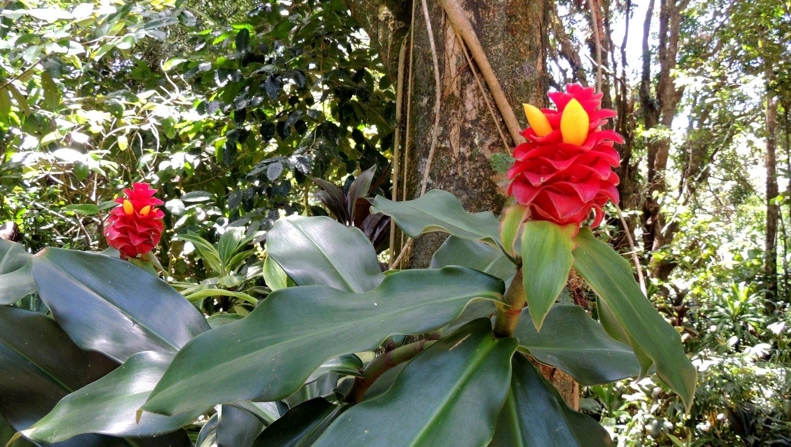 Blumen auf Hawaii