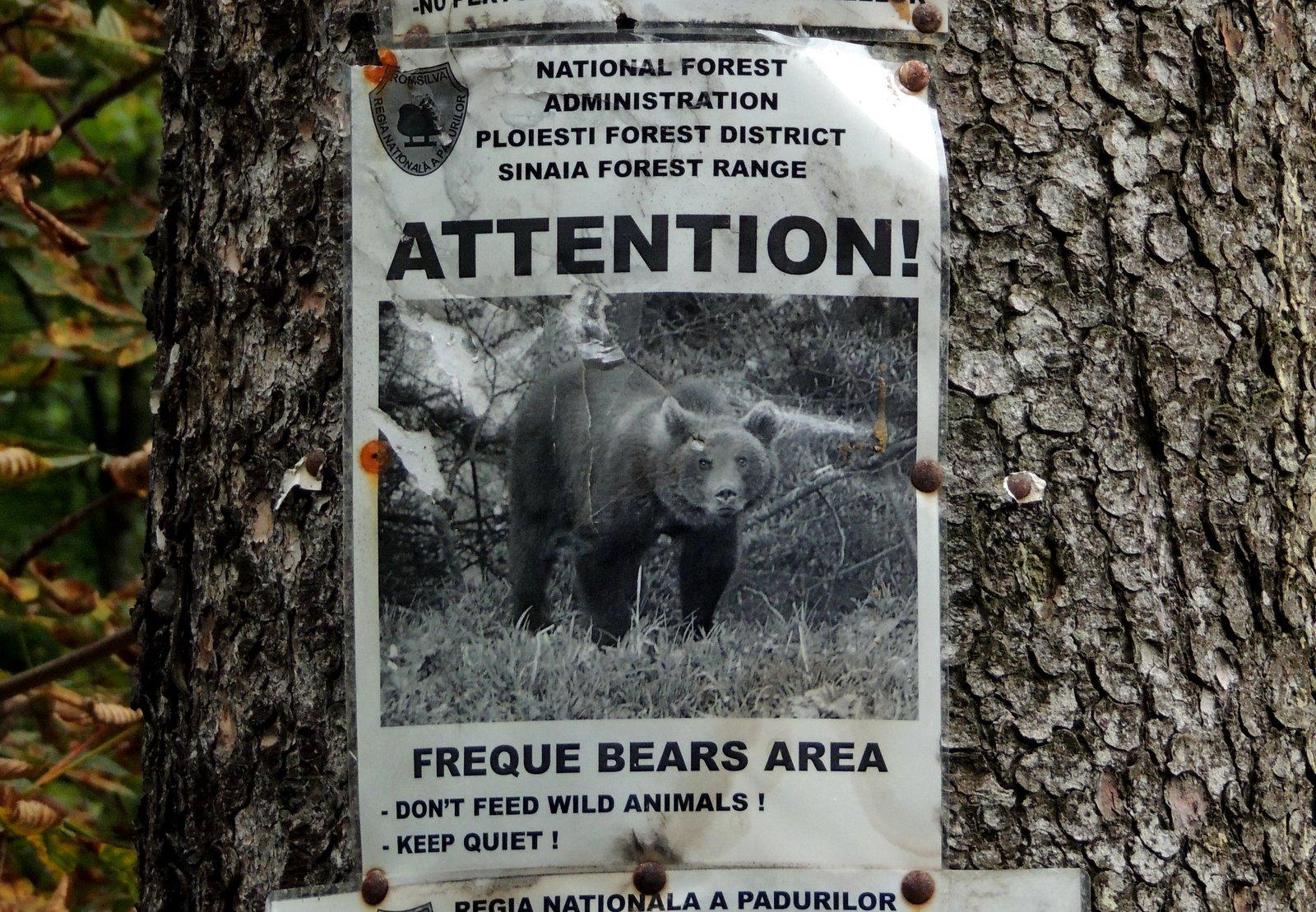 Achtung Bären! Schild in Sinaia