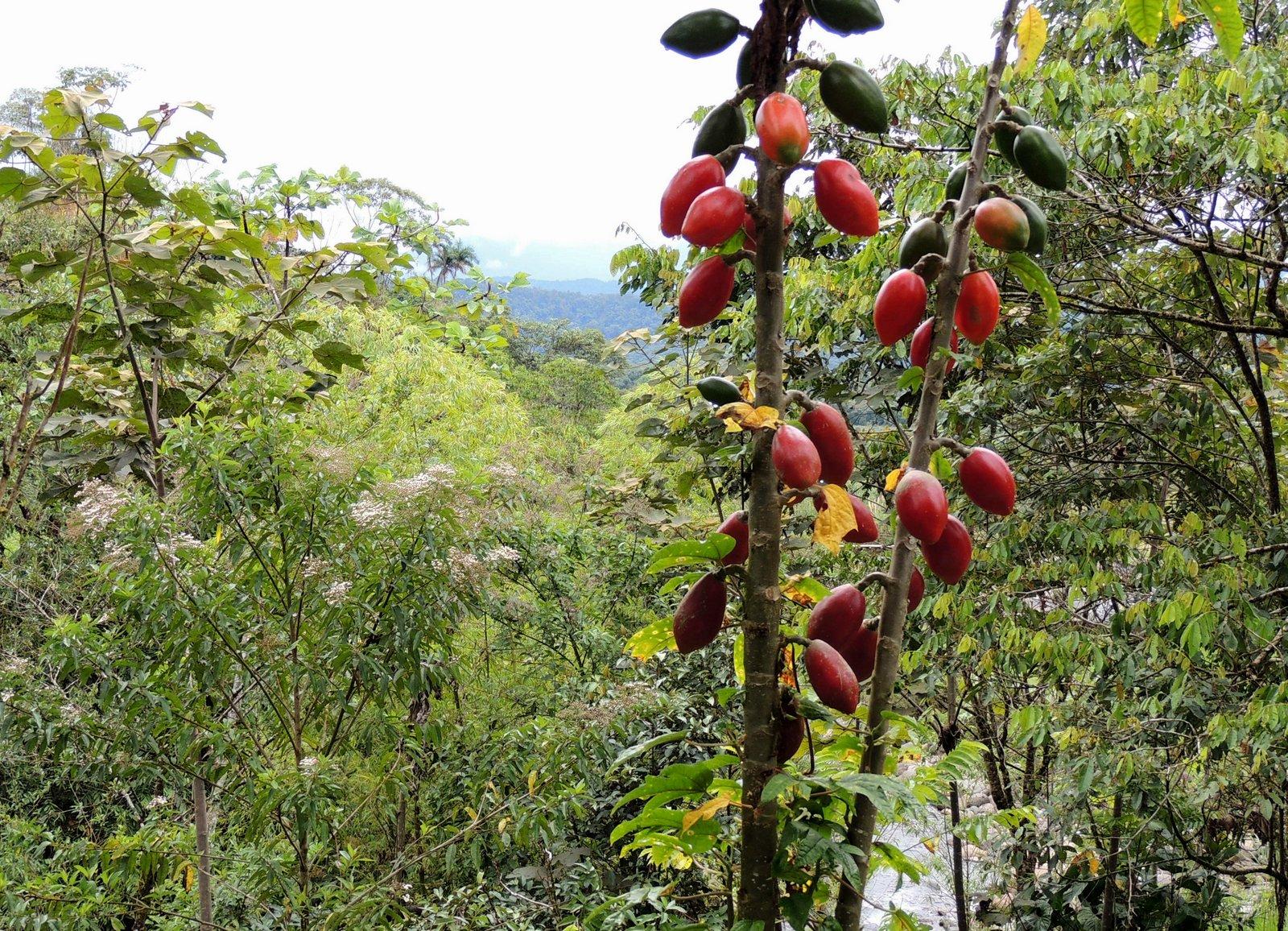 Im Amazonasbecken Ecuador