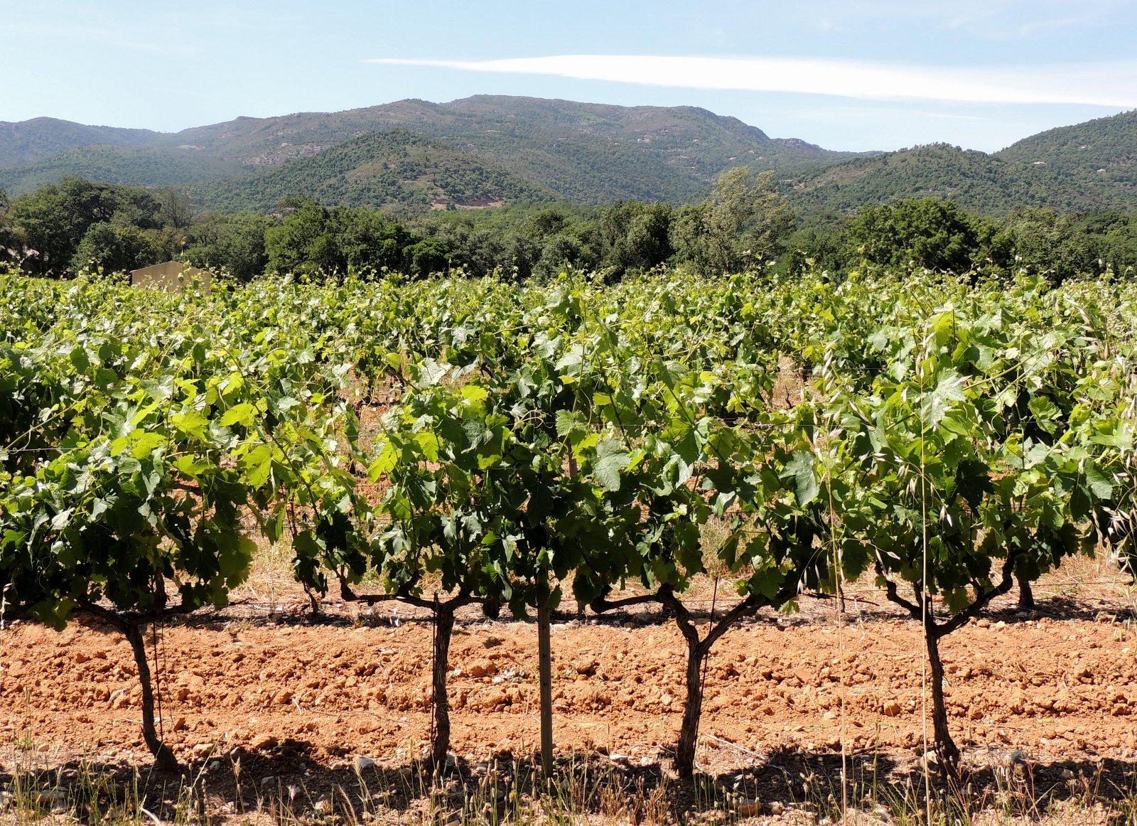 Weinbaugebiet Côte de Provence