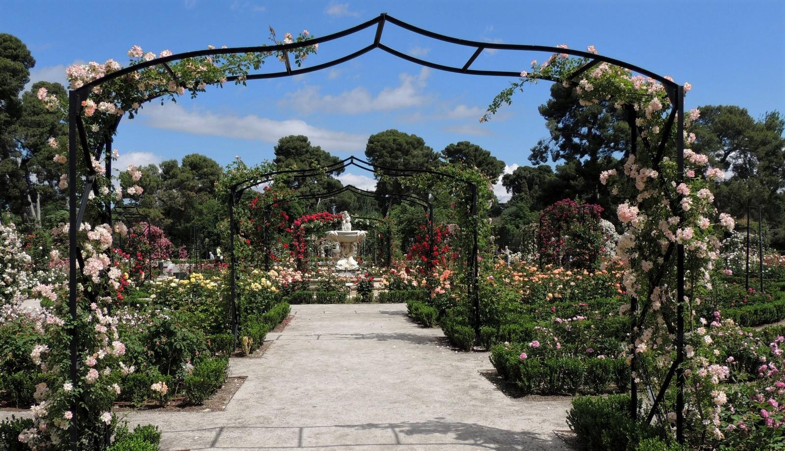 Retiro Park - Rosengarten