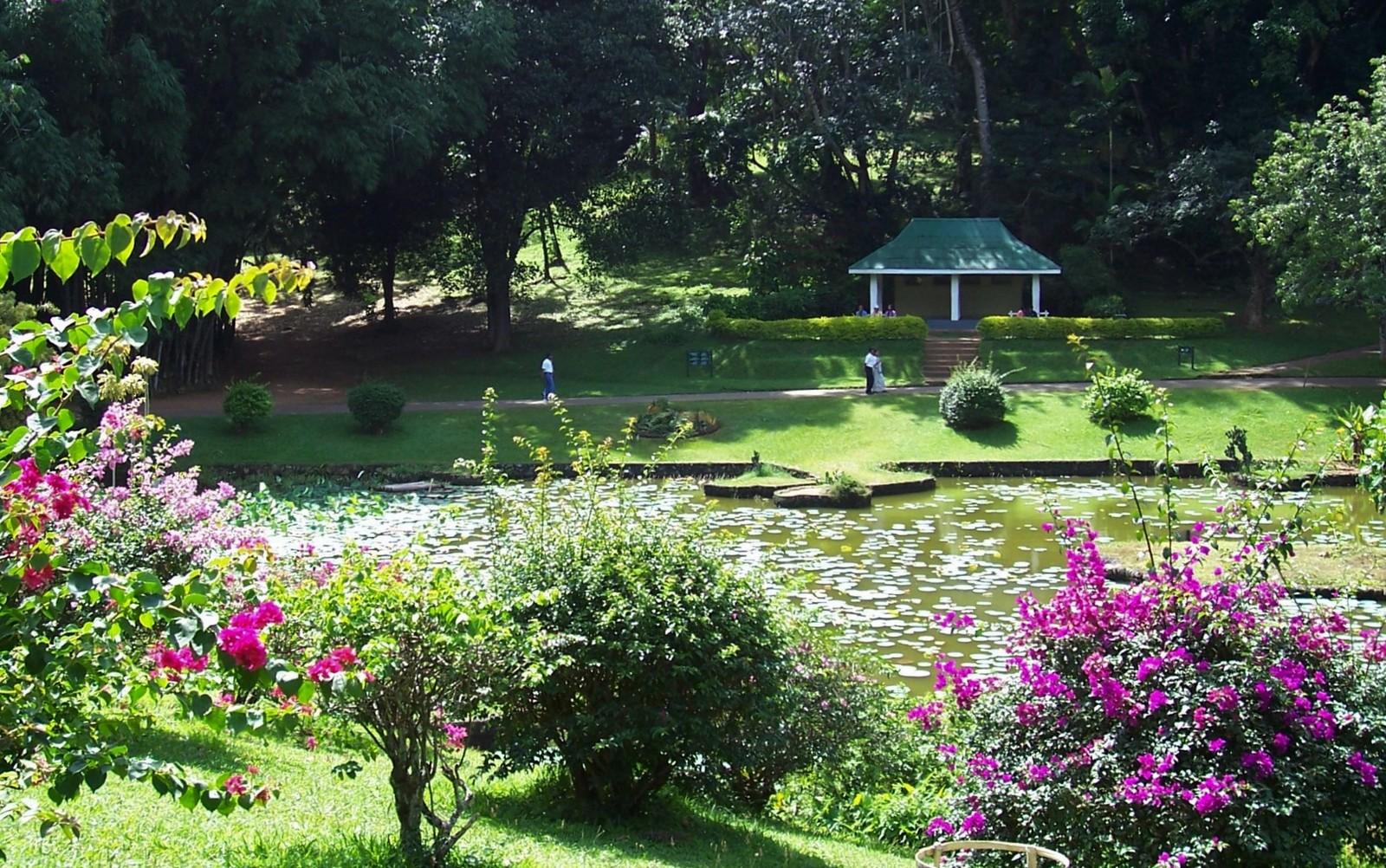 Botanischer Garten Peredeniya - Ceylon