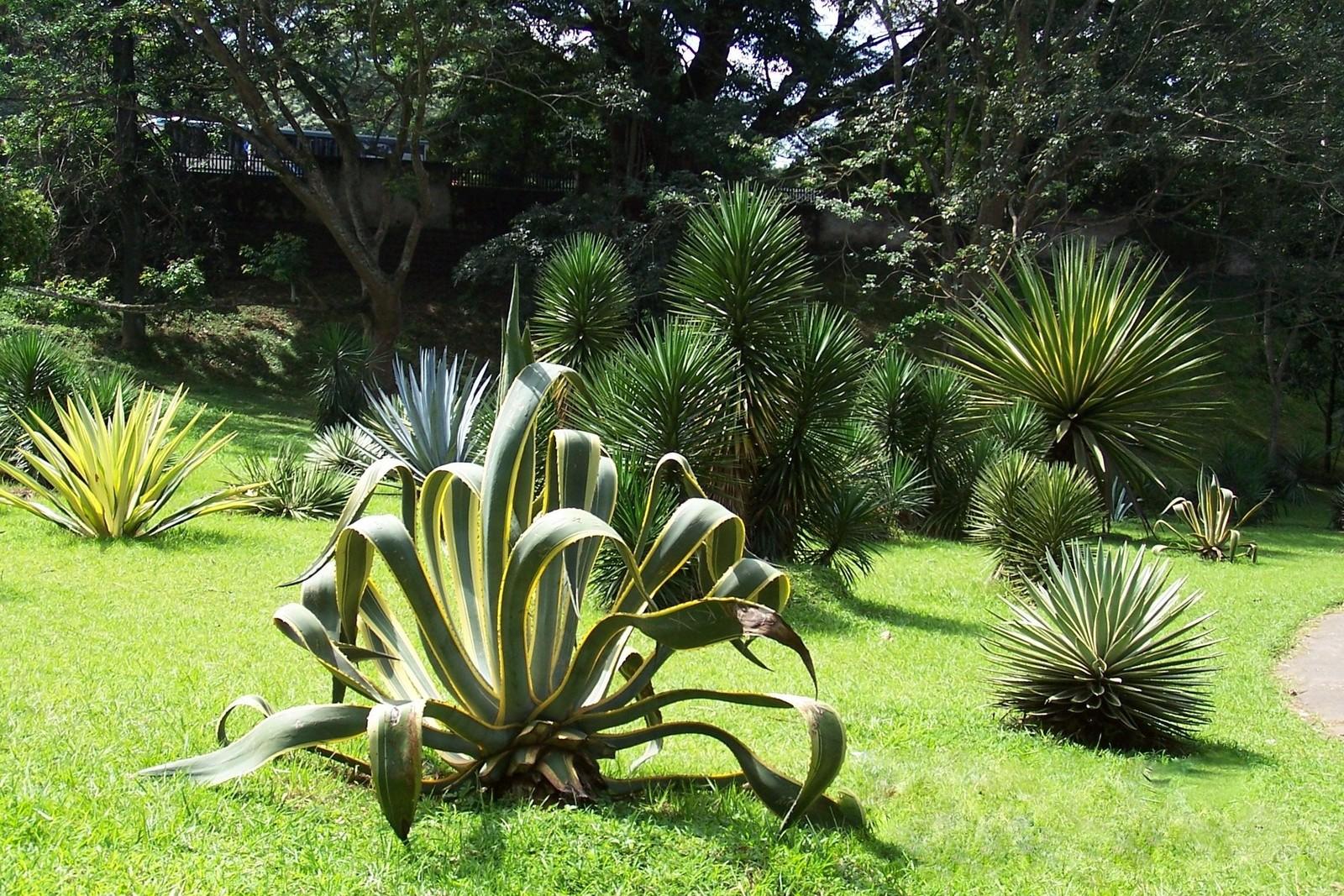Botanischer Garten Peredeniya