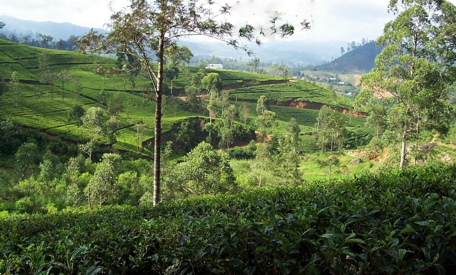 Im Hochland von Ceylon