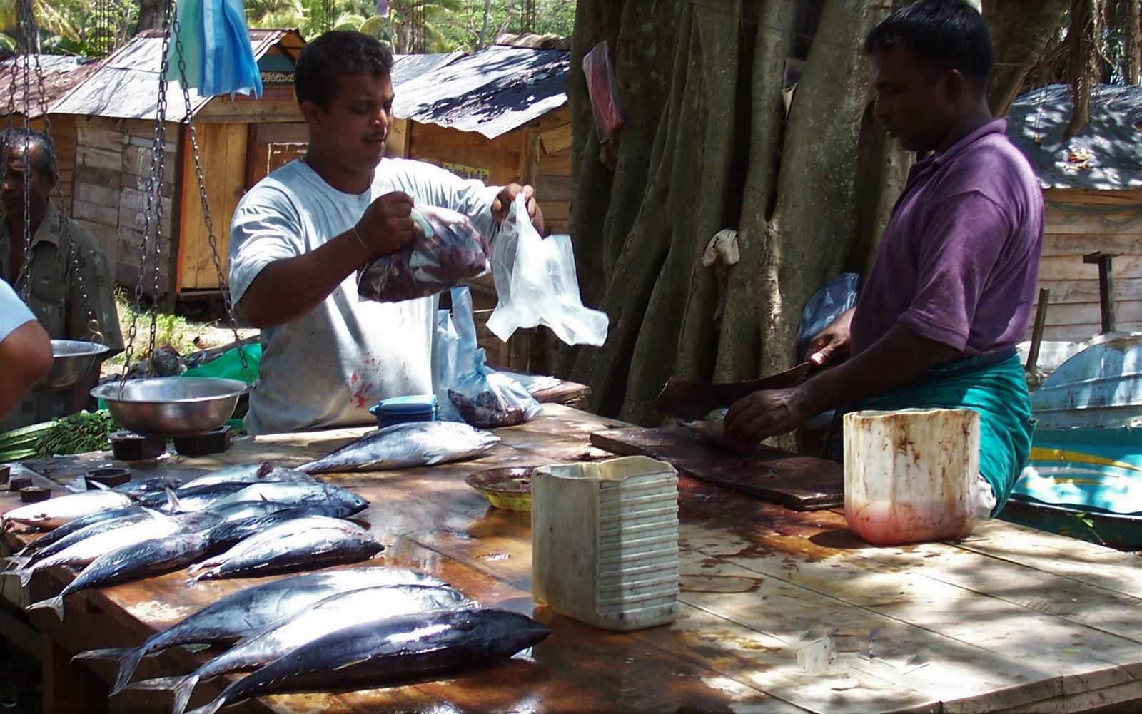 Galle - Fischmarkt