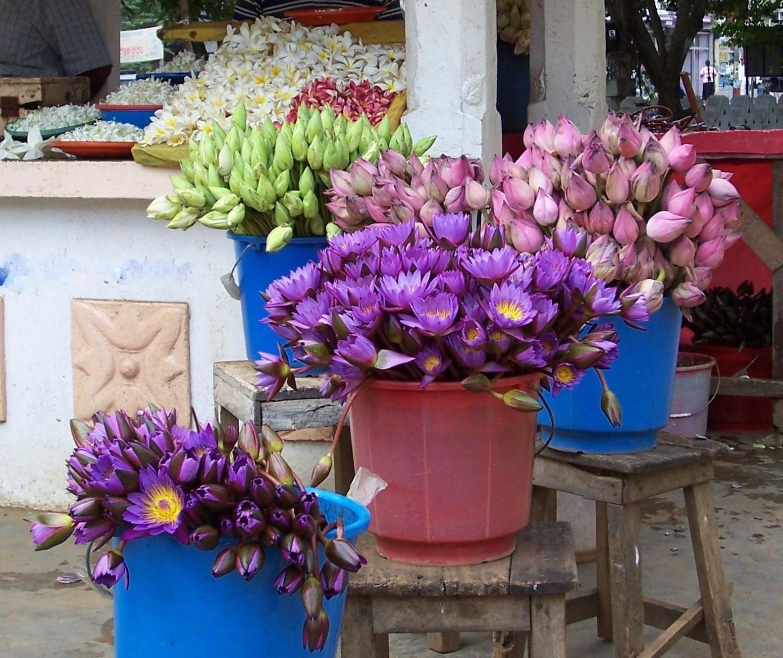 Verkauf von Tempelblumen im Muthiyangana Raja Maha Viharaya - Badulla
