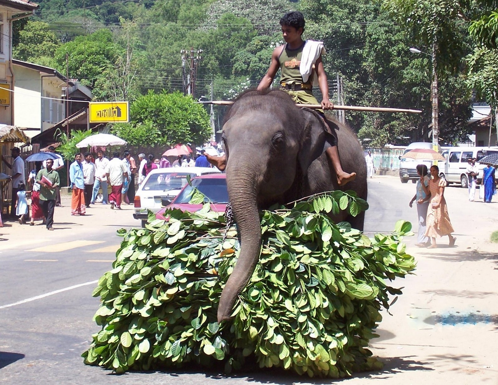 Arbeitselefant in Badulla - Ceylon
