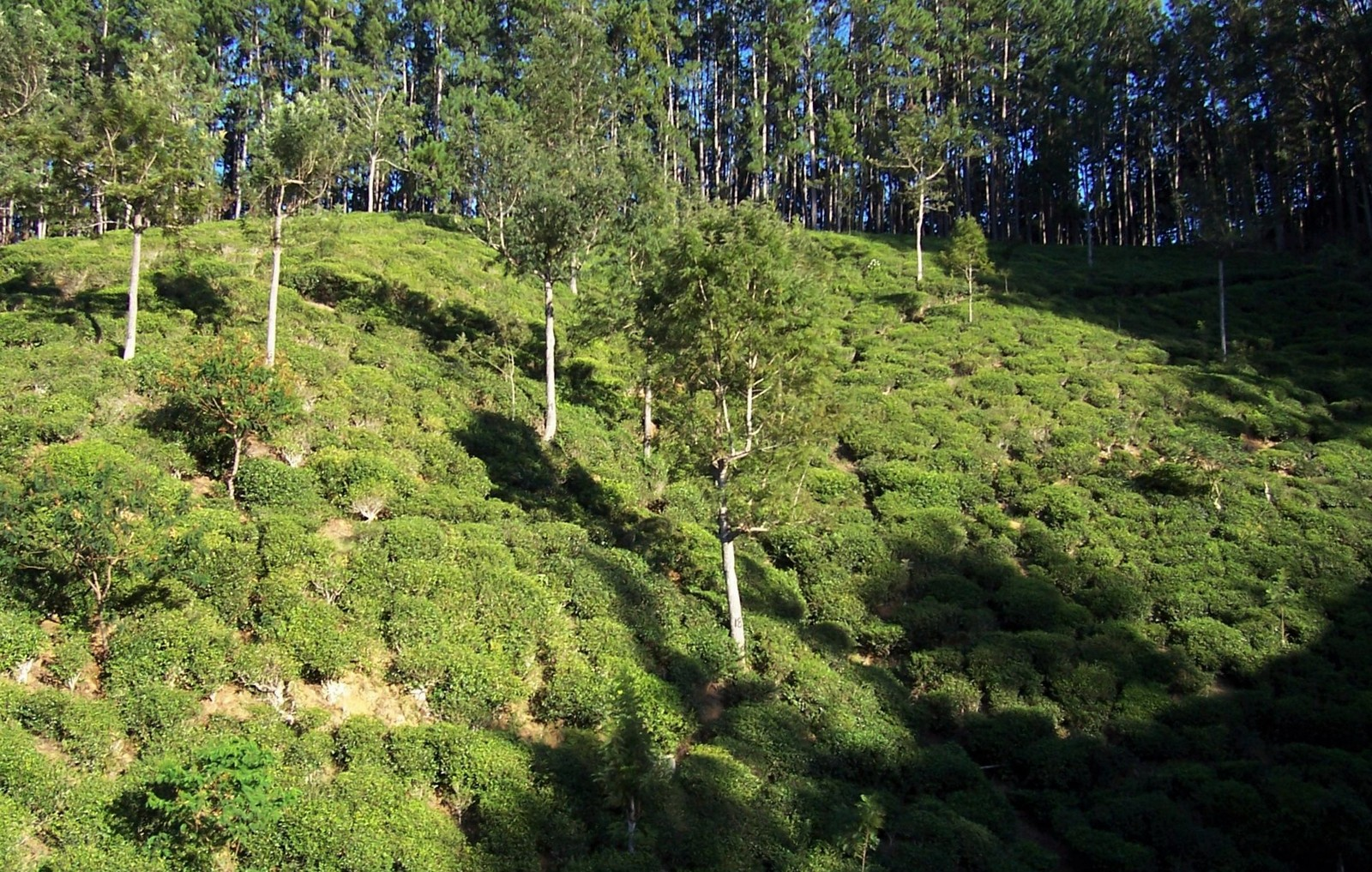Hochlandbahn am Thangamale Sanctuary / Streckenkilometer 240