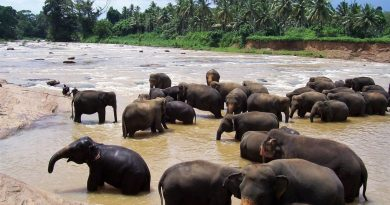 Ceylon – eine klassische Rundreise mit Chauffeur